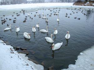 dzikie-ptaki